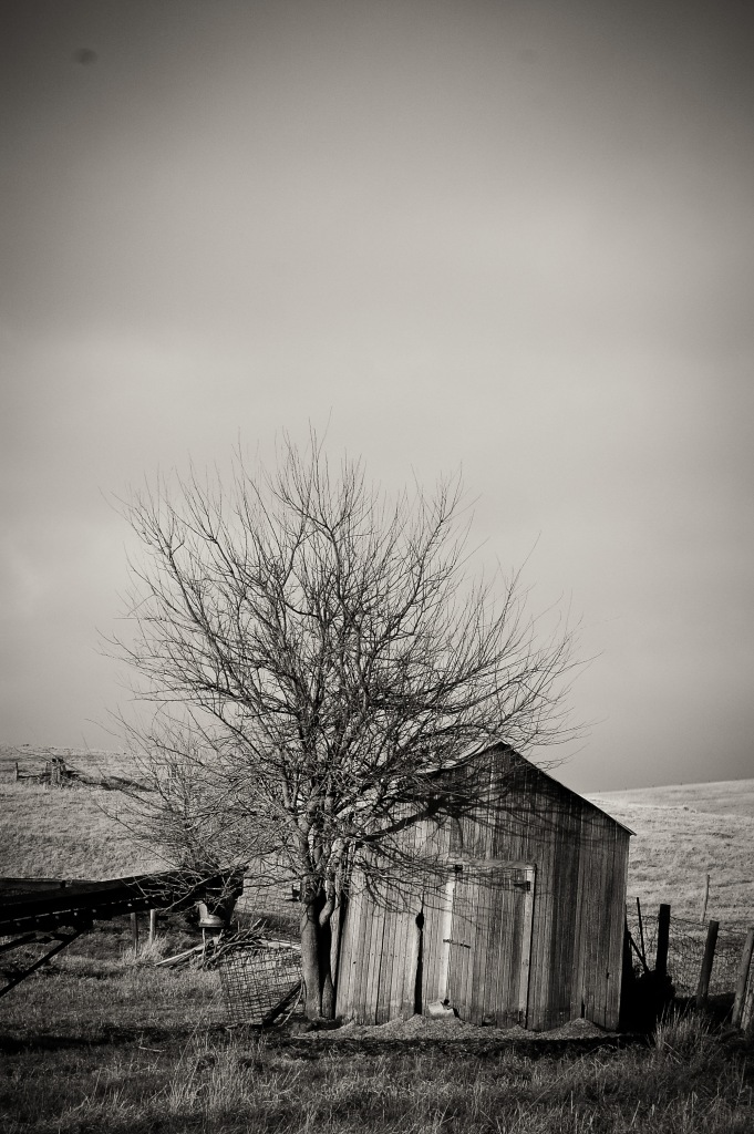 Landscape-32
